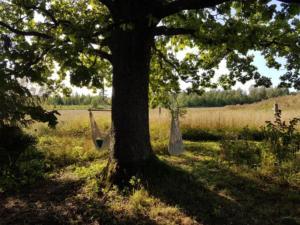 Abelites Paradies Apfelbaum (2)